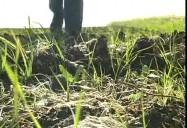 The Properties of Soil
