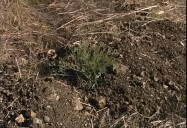 Introduction to Soil Science: Soil Forming Factors