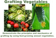 Vol. 6: Grafting Vegetables Approach and Cleft Grafting