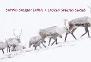 Saving Sacred Lands & Sacred Species Series