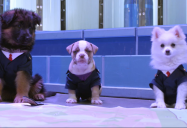 And Then They Were Puppies (Episode 7A): Odd Squad Series Two