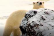 Canada - Polar Bear Spotting (Episode 11):  Are We There Yet? World Adventure (Season 1)