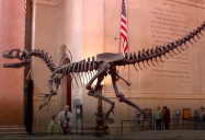 USA – New York Museum (Episode 38): Are We There Yet? (Season 1)