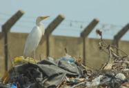 Afrique: la guerre des sacs plastiques