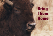 Bring Them Home