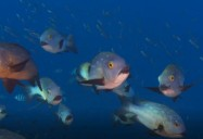 Exploring Coral Reefs: Reproduction and Survival