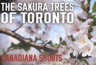 The Sakura Trees of Toronto: Canadiana Shorts