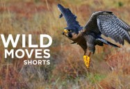 Wild Moves Series